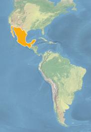 Ausschnitt einer Weltkarte in hellen Blau-, Beige- und Grüntönen. Der amerikanische Kontinent, Mexiko ist hervorgehoben.