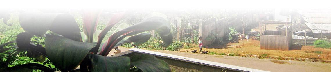 Der untere Teil des obigen Fotos als Dekoration wiederholt. Links ist eine Pflanze und rechts eine Straße zu sehen.