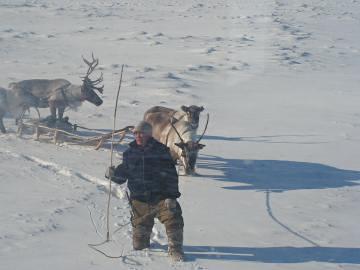 Schneefläche, ein Mann mit dunkler Jacke steht darin, hinter ihm Rentiere und ein Schlitten. Sie werfen lange, blaue Schatten.